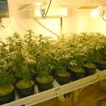 Indoor Gardening Technology: Four Best-Seller Grow Lights for Marijuana